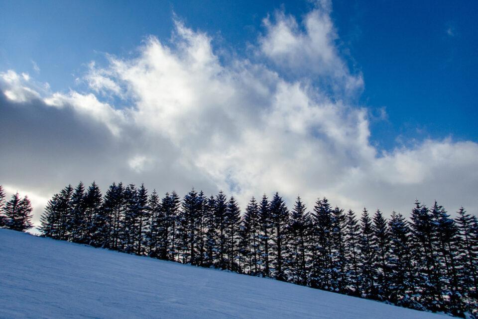 ニセコのゲレンデと針葉樹と空