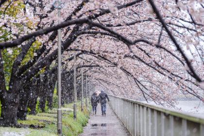雪の大横川桜並木