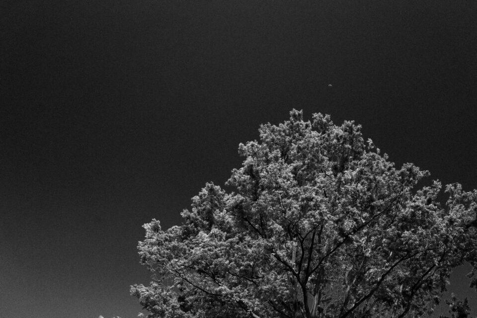 木と青空と月