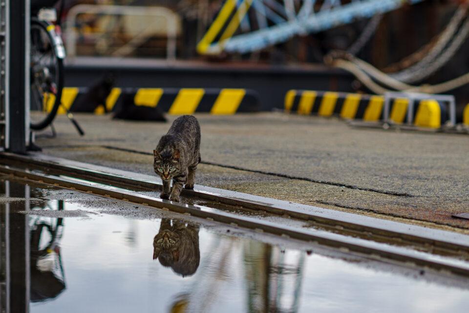 水たまりとネコ