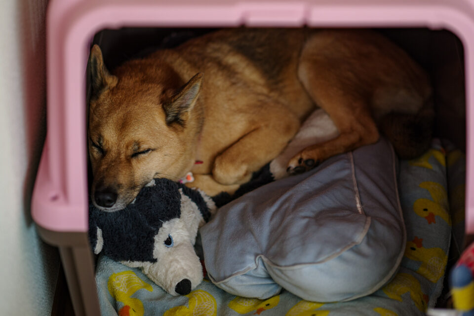 丸まって眠る犬