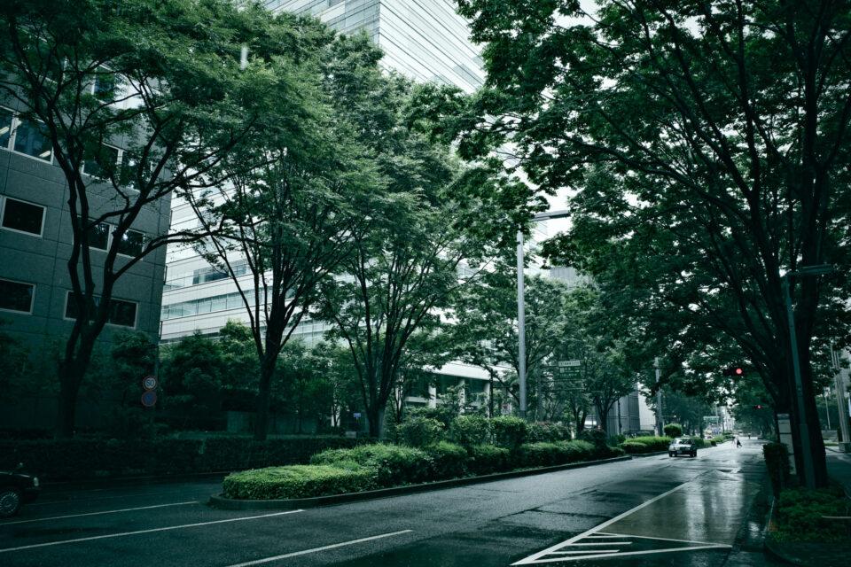 新宿西口の緑