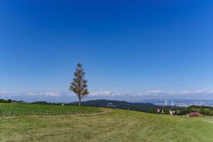 あわじ花さじきの北海道みたいな風景