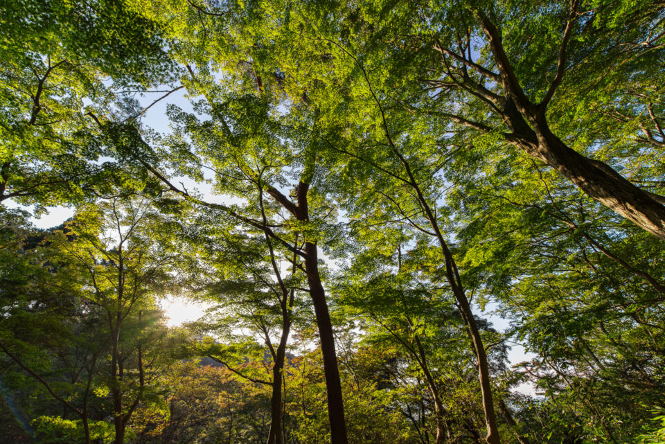 摩耶山の森