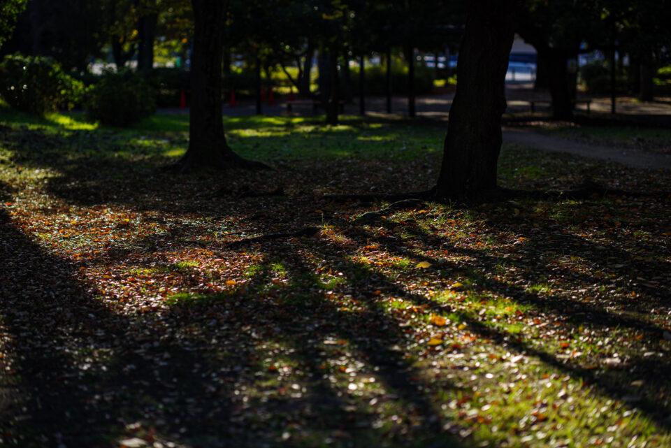 落ち葉の地面