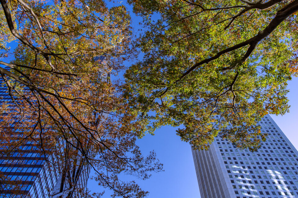 新宿高層ビル街の紅葉