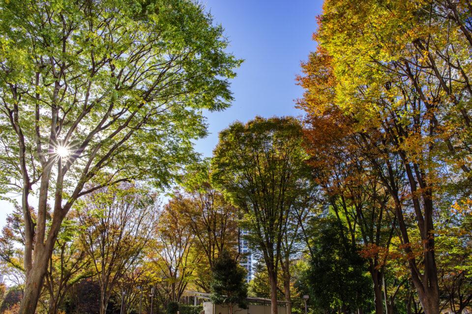 新宿公園の入り口の紅葉