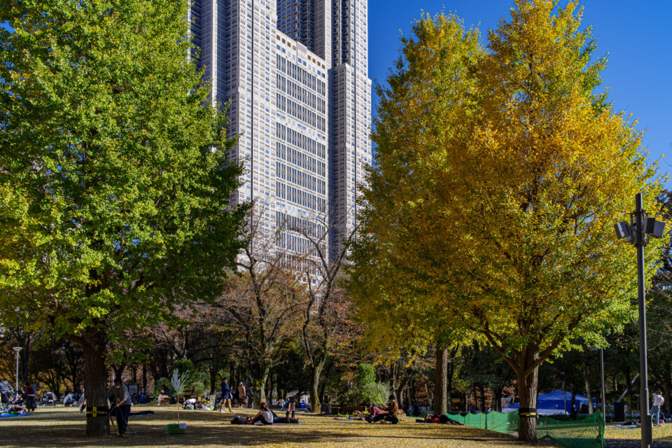 都庁と新宿公園の紅葉