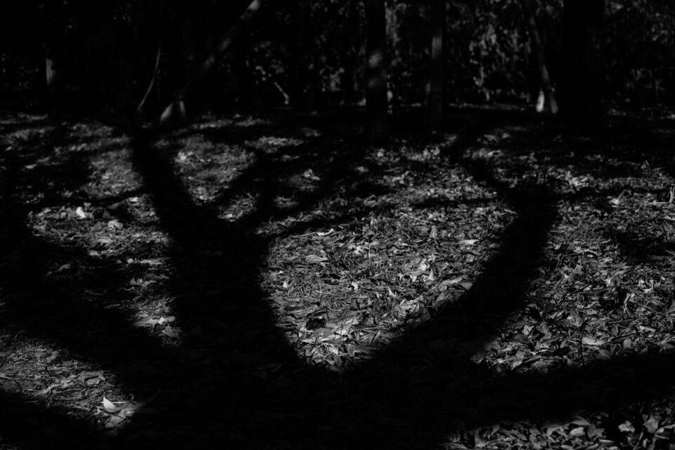 モノクロの木漏れ日