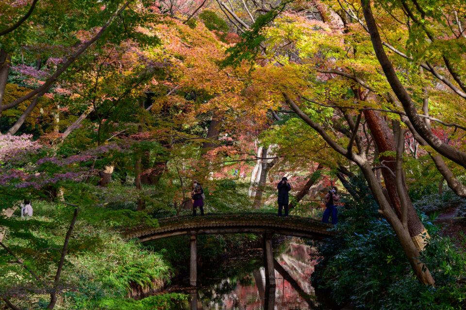 六義園の山陰橋の紅葉