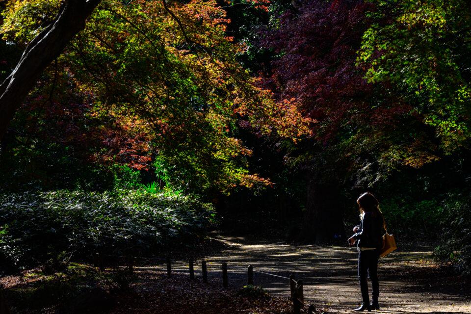 六義園の逆光の紅葉と女性