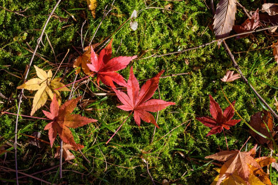 苔と紅葉の落ち葉