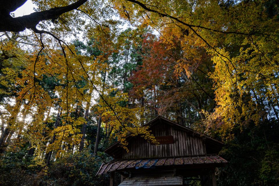 八王子神社の紅葉