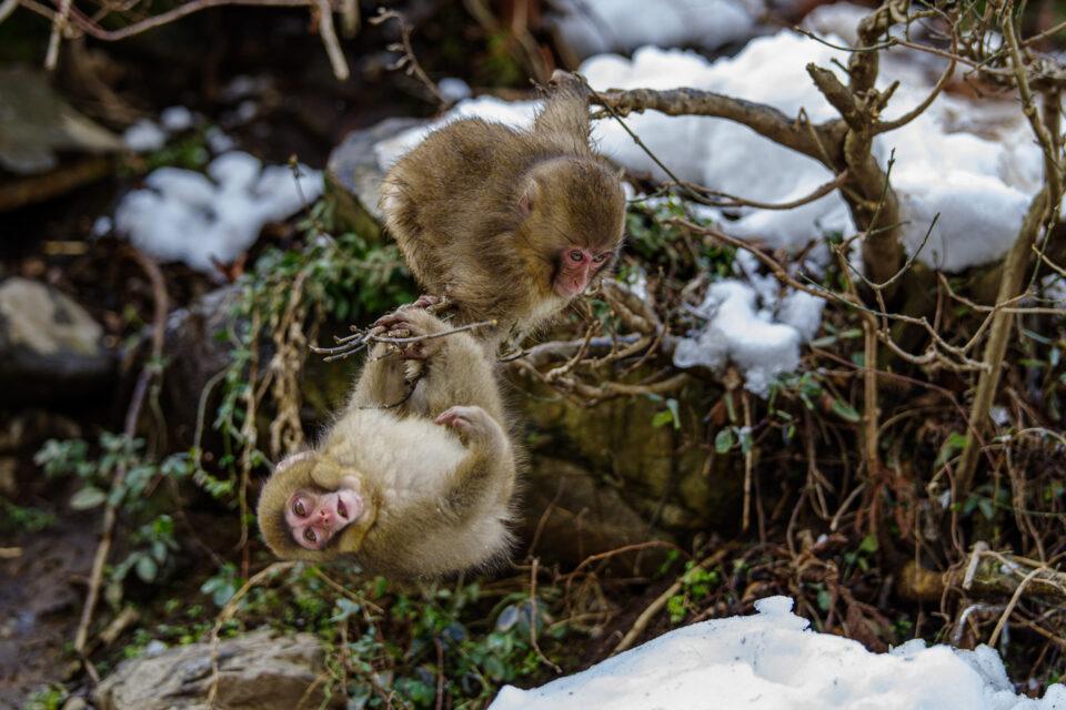 木の上で遊ぶ子猿たち