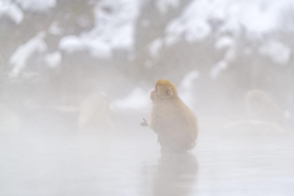 湯煙の中の猿