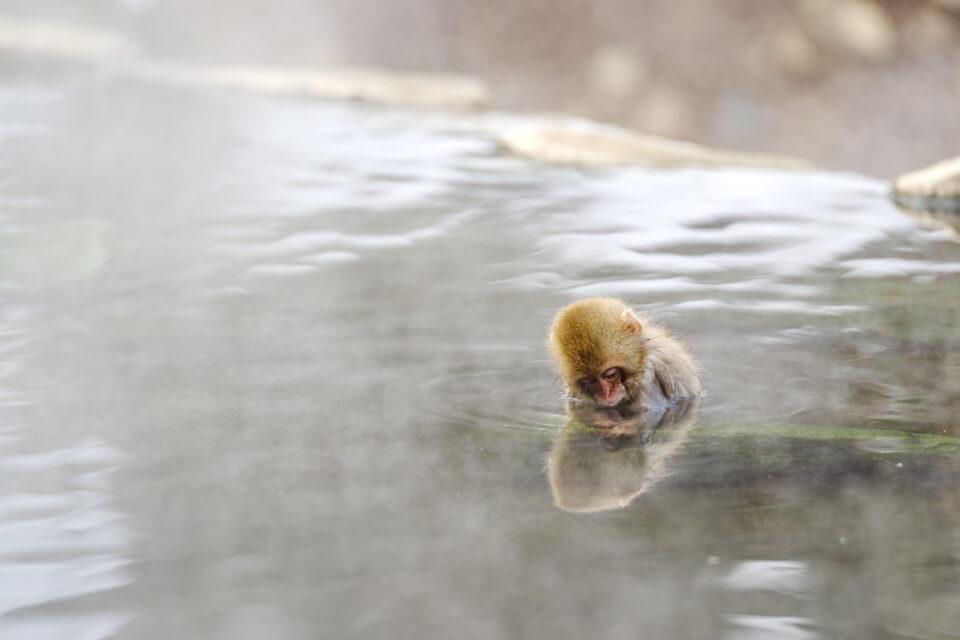 温泉に浸かる子猿