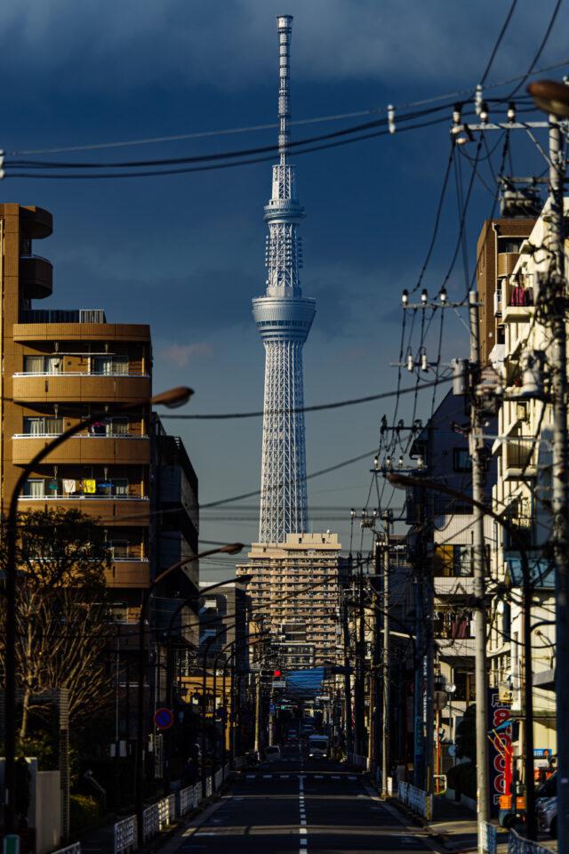 下町から見た東京スカイツリー 縦構図カラー