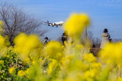 菜の花と飛行機