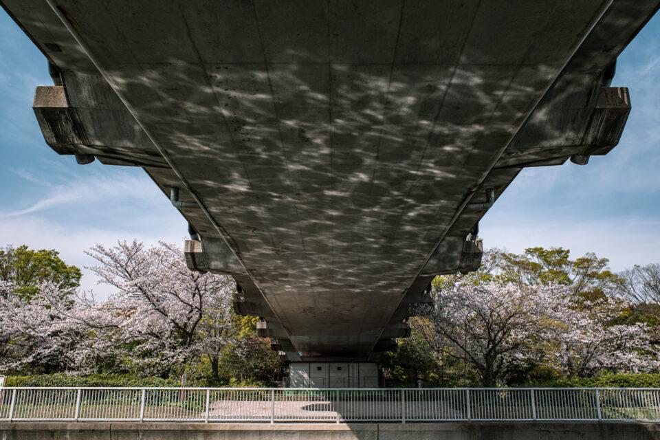 木場公園大橋の下