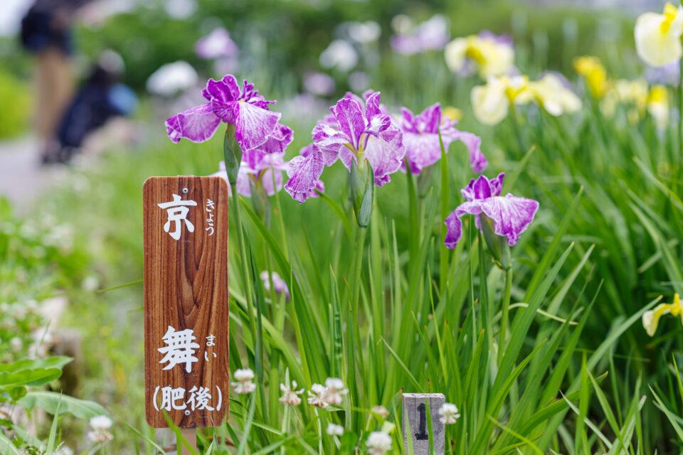 花菖蒲の産地看板