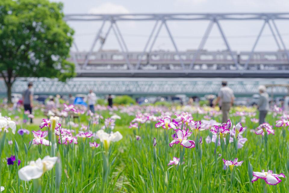 菖蒲園と鉄橋