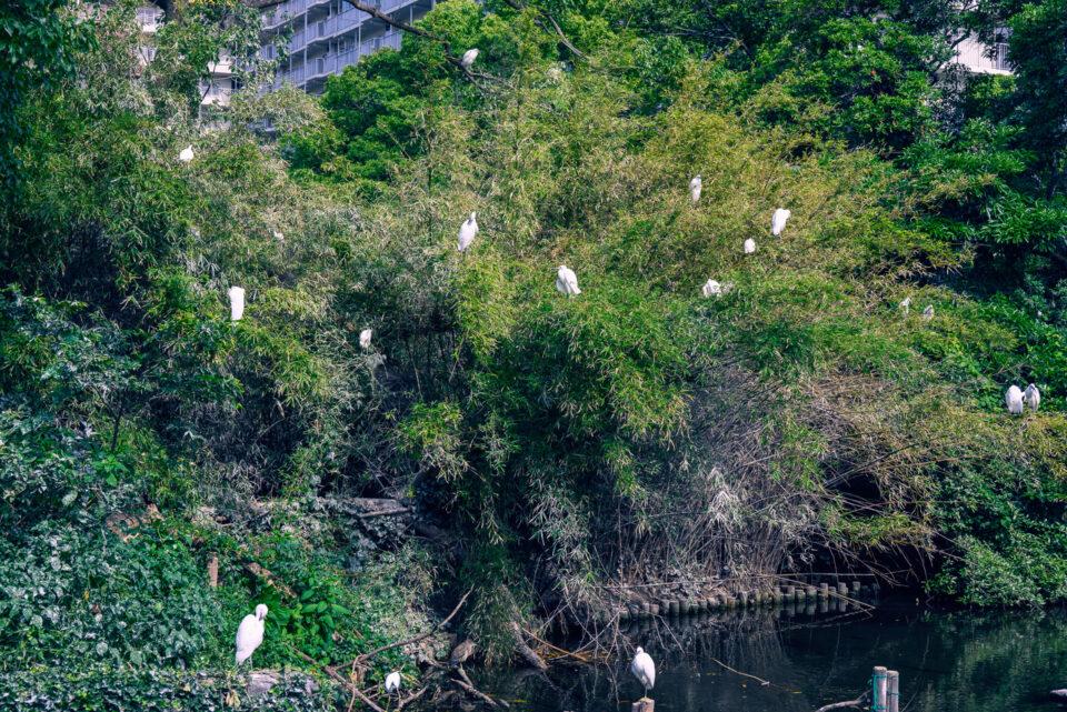 親水公園の野鳥の島