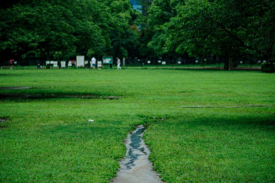 雨の木場公園