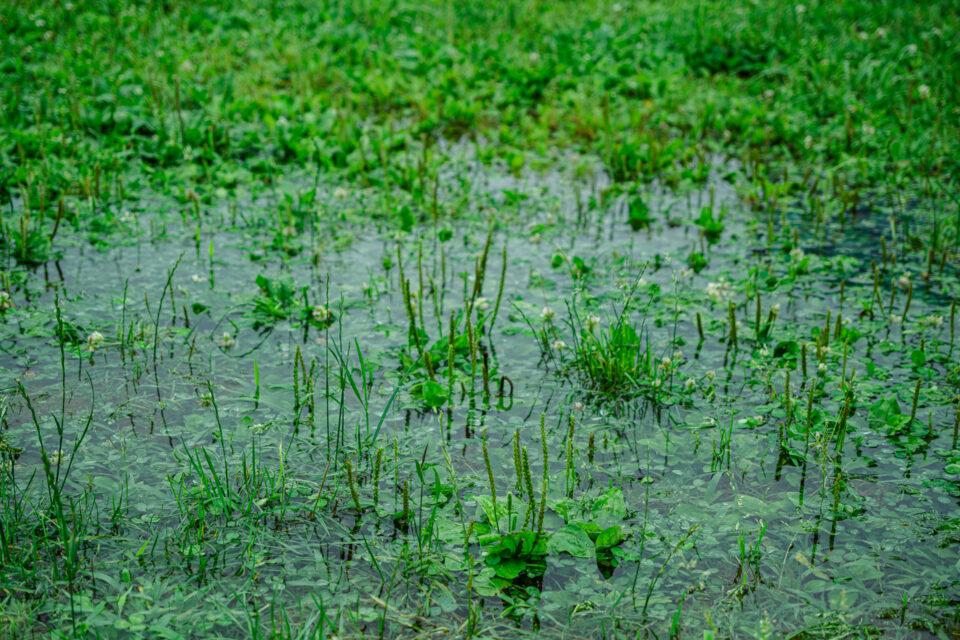 草原の水たまり