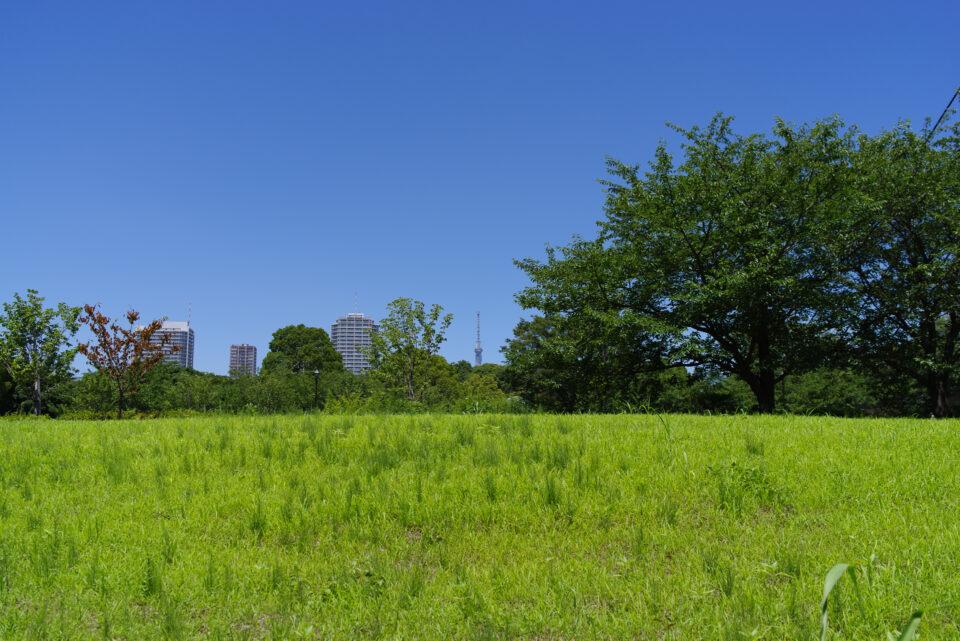 グリーンの広場と東京スカイツリー