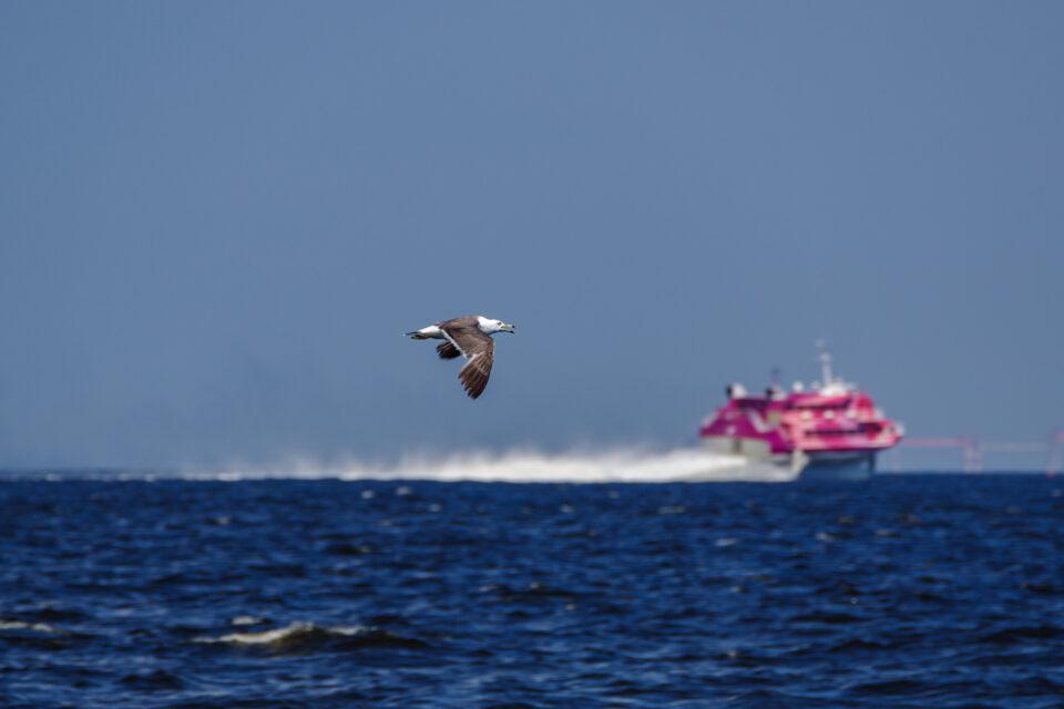 ウミネコと高速船