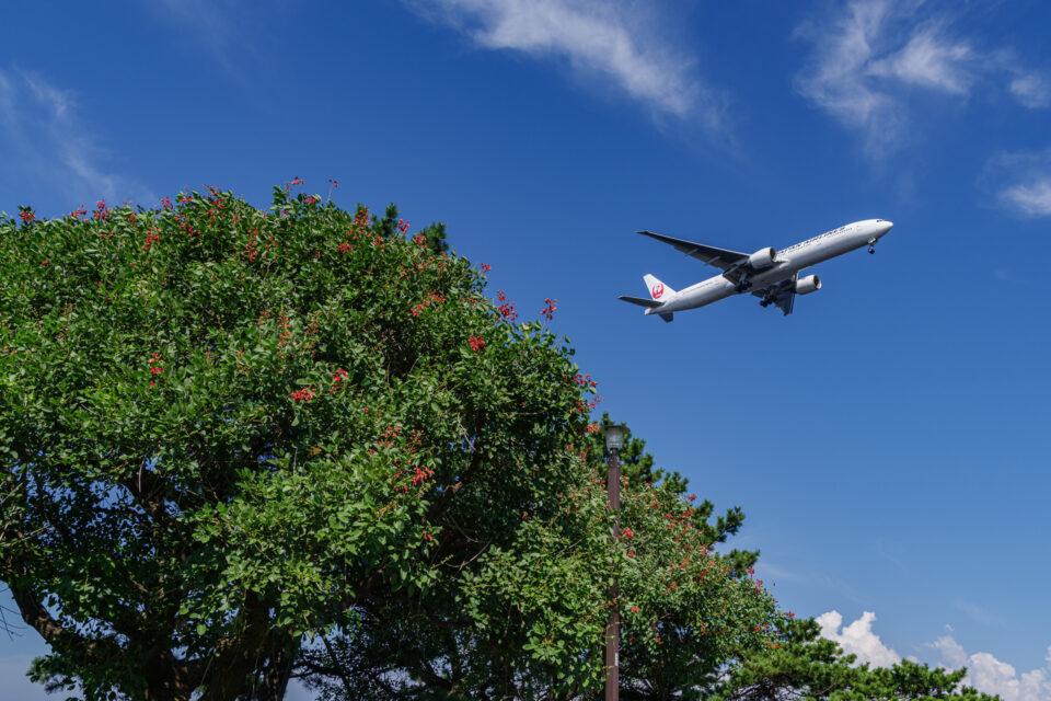 城南島海浜公園に咲く花と飛行機