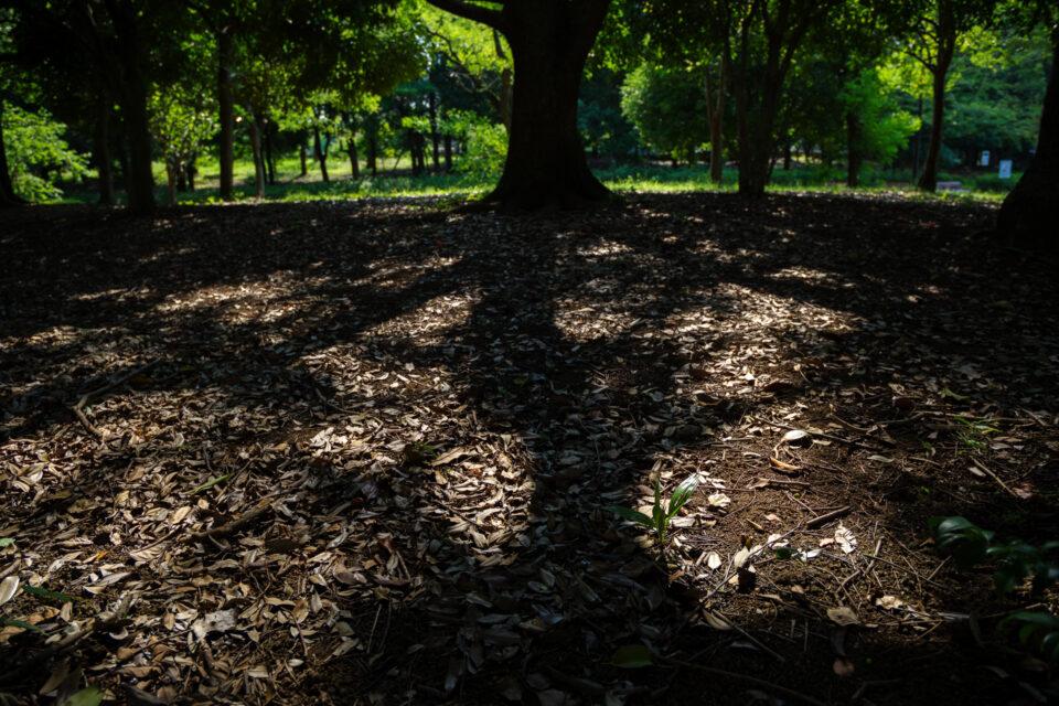 木漏れ日の森の中