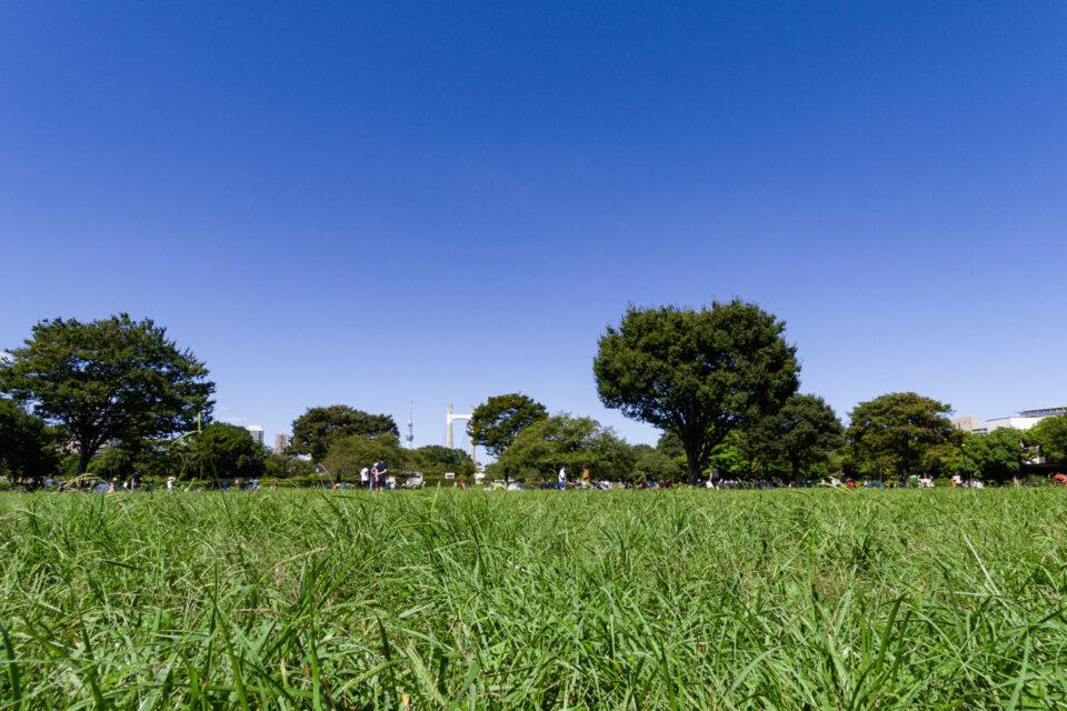 木場公園の草原